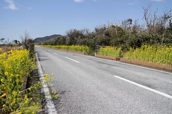 千葉館山の旅 フラワーロード